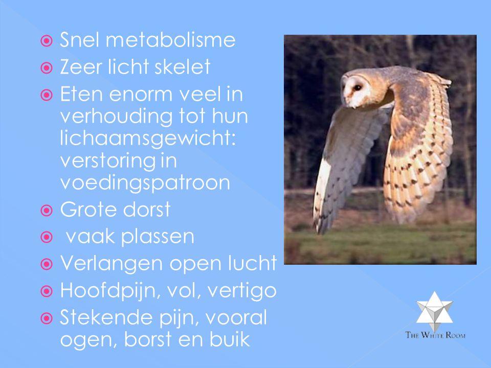  Snel metabolisme  Zeer licht skelet  Eten enorm veel in verhouding tot hun lichaamsgewicht: verstoring in voedingspatroon  Grote dorst  vaak pla