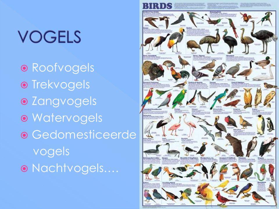  Roofvogels  Trekvogels  Zangvogels  Watervogels  Gedomesticeerde vogels  Nachtvogels….