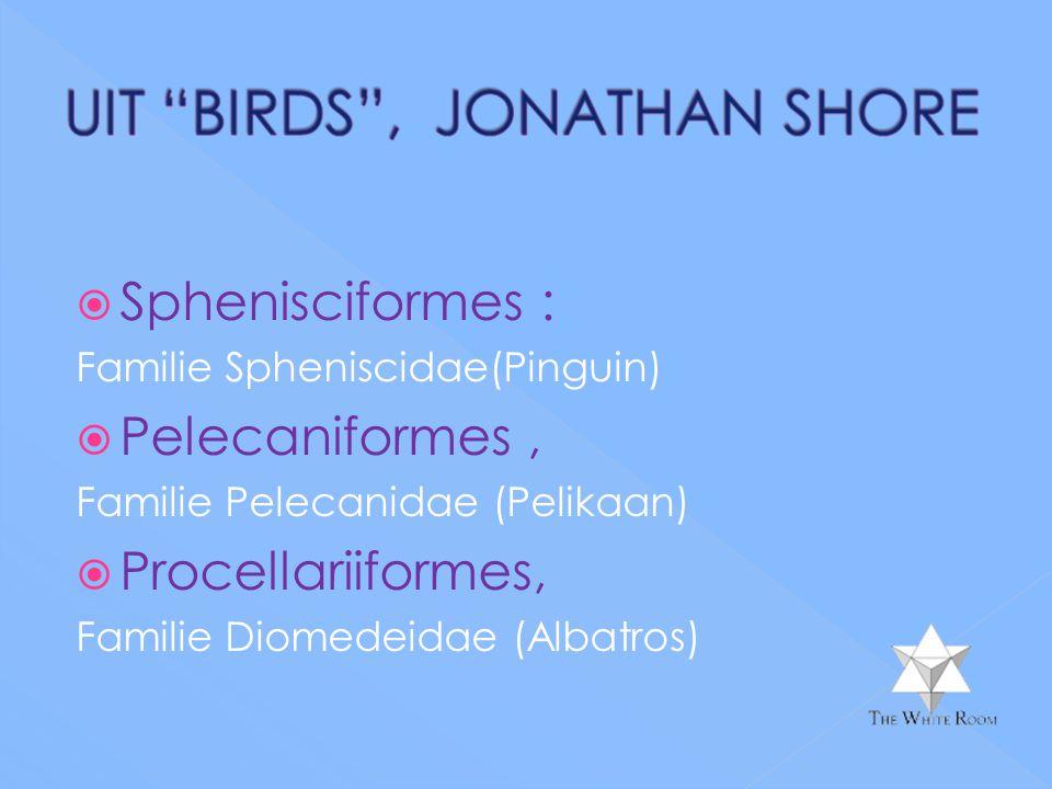  Sphenisciformes : Familie Spheniscidae(Pinguin)  Pelecaniformes, Familie Pelecanidae (Pelikaan)  Procellariiformes, Familie Diomedeidae (Albatros)