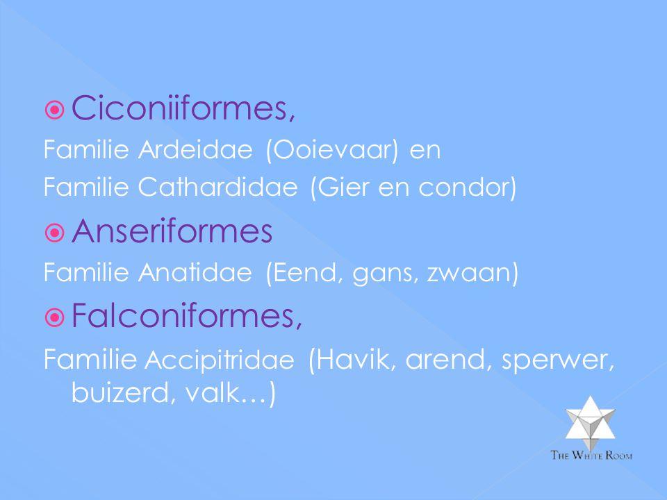  Ciconiiformes, Familie Ardeidae (Ooievaar) en Familie Cathardidae (Gier en condor)  Anseriformes Familie Anatidae (Eend, gans, zwaan)  Falconiformes, Familie Accipitridae (Havik, arend, sperwer, buizerd, valk…)