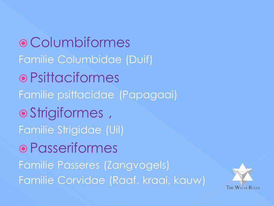  Columbiformes Familie Columbidae (Duif)  Psittaciformes Familie psittacidae (Papagaai)  Strigiformes, Familie Strigidae (Uil)  Passeriformes Familie Passeres (Zangvogels) Familie Corvidae (Raaf, kraai, kauw)