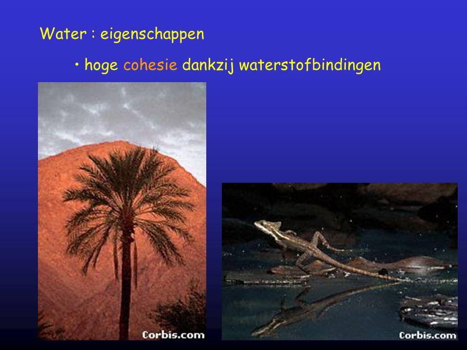 Water : eigenschappen hoge cohesie dankzij waterstofbindingen