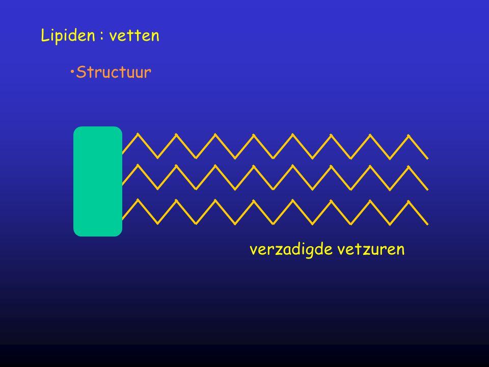 Lipiden : vetten Structuur verzadigde vetzuren