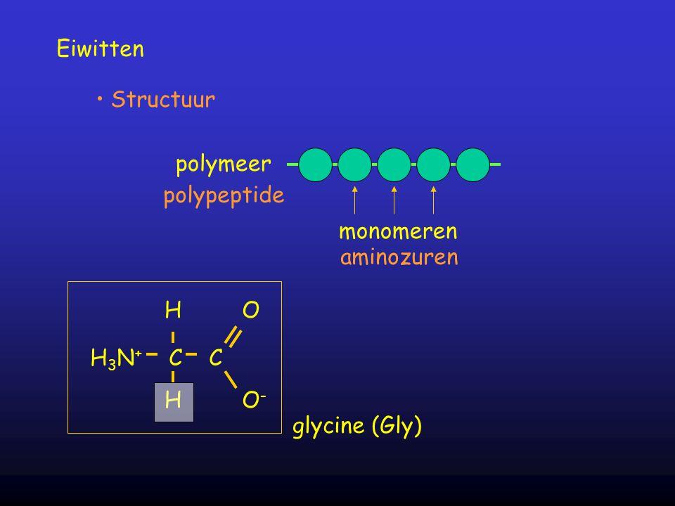 Eiwitten polymeer monomeren Structuur polypeptide aminozuren H 3 N + C C H H O O-O- glycine (Gly)
