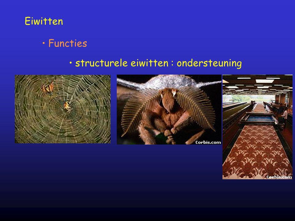 Eiwitten Functies structurele eiwitten : ondersteuning