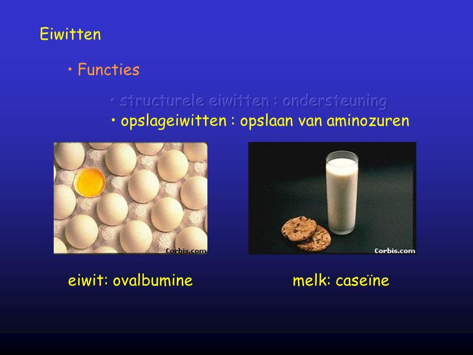 Eiwitten Functies eiwit: ovalbuminemelk: caseïne