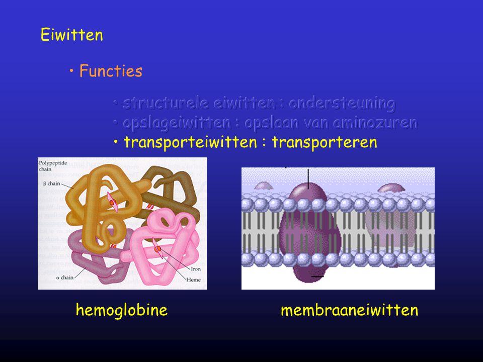 Eiwitten Functies hemoglobine membraaneiwitten