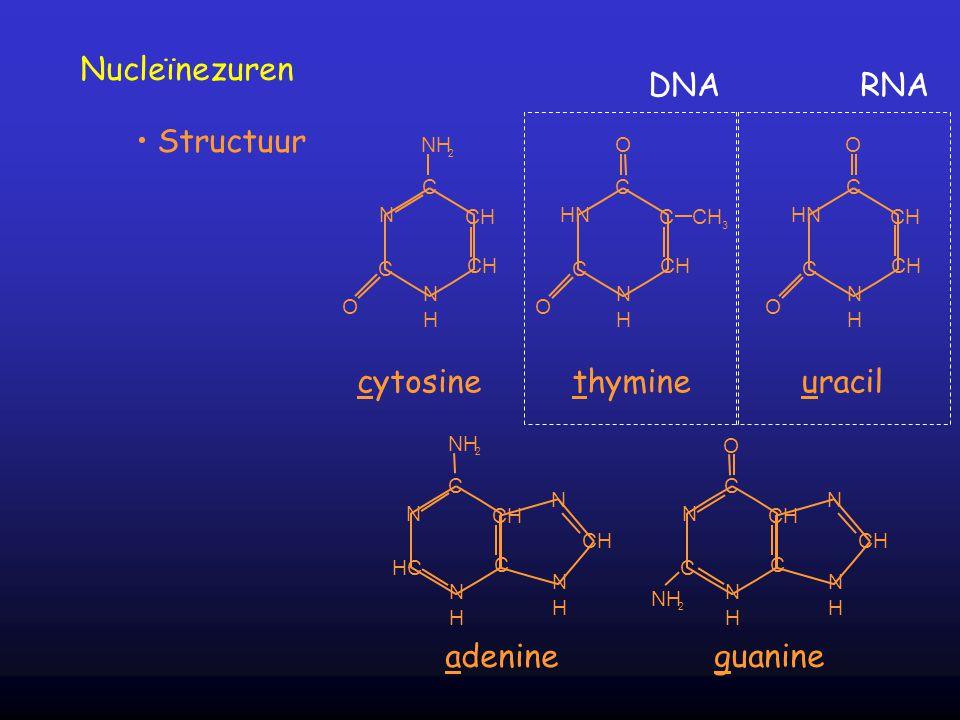 C N C CH N H NH 2 O cytosine C HN C C CH 3 CH N H O O thymine C HN C CH N H O O uracil C N HC CH C N H NH 2 N CH N H adenine C N C CH C N H N N H O NH