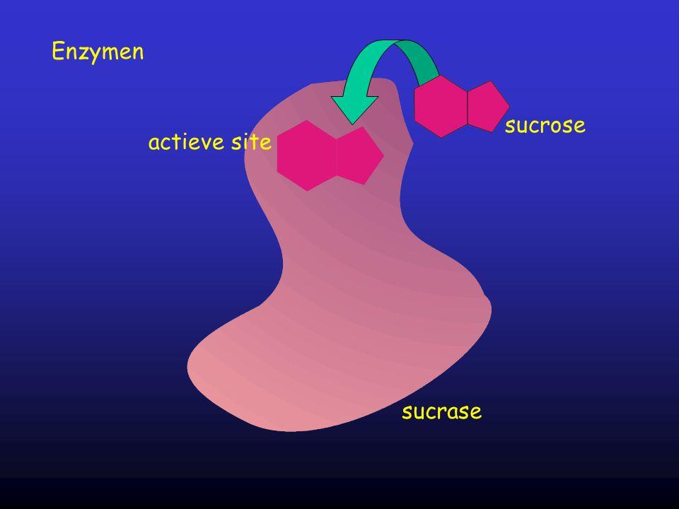 Enzymen sucrose sucrase actieve site
