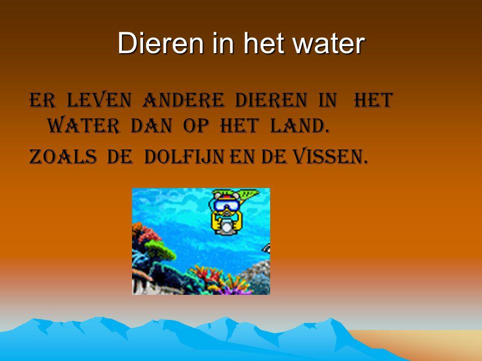 Dieren in het water Er leven andere dieren in het water dan op het land. Zoals de dolfijn en de vissen.