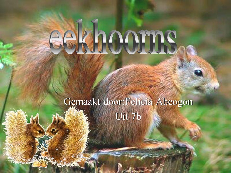 De inleiding Hallo, Hallo, Ik hou mijn spreekbeurt over eekhoorns.