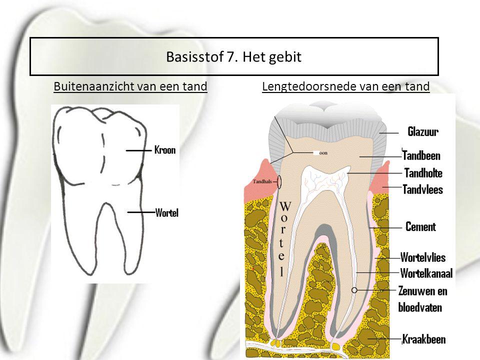 Buitenaanzicht van een tandLengtedoorsnede van een tand x Basisstof 7. Het gebit