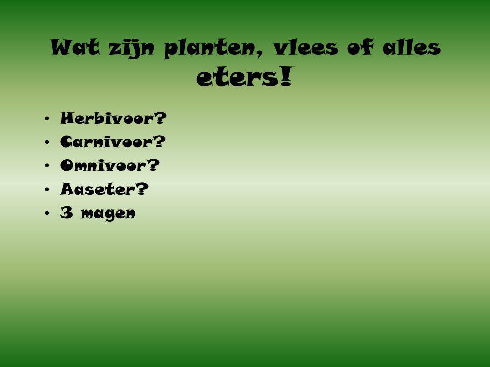 Wat zijn planten, vlees of alles eters! Herbivoor? Carnivoor? Omnivoor? Aaseter? 3 magen
