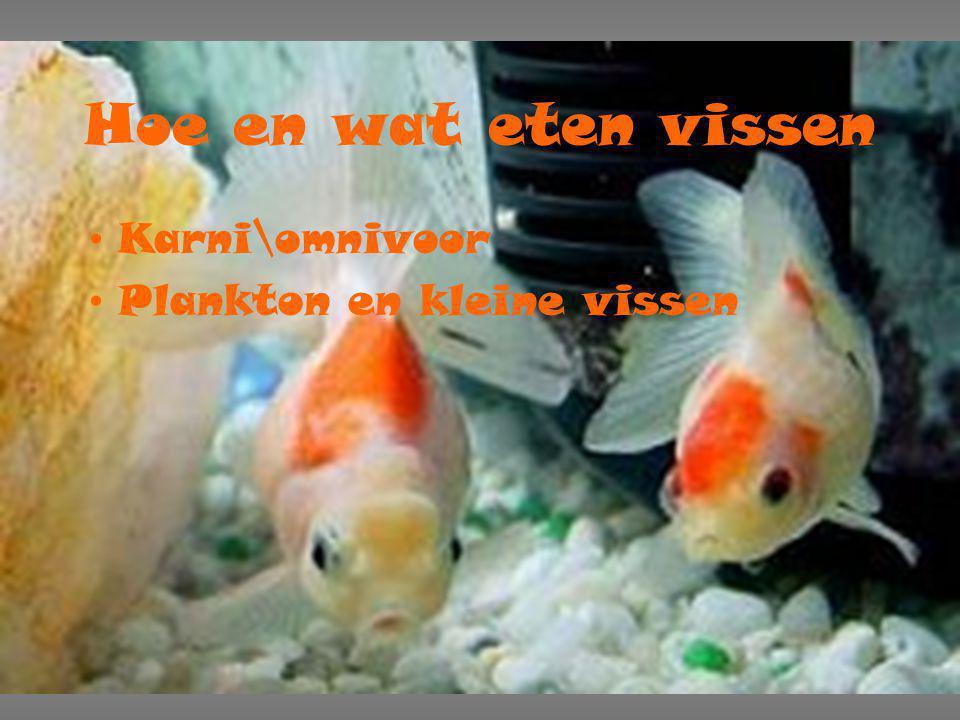 Hoe en wat eten vissen Karni\omnivoor Plankton en kleine vissen