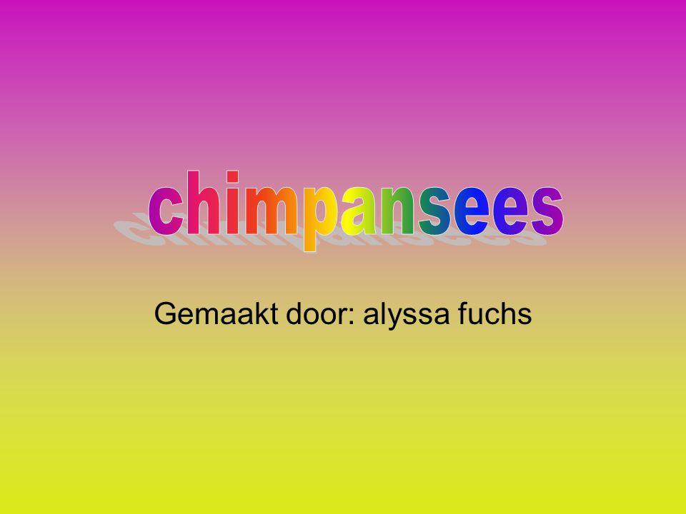 Gemaakt door: alyssa fuchs