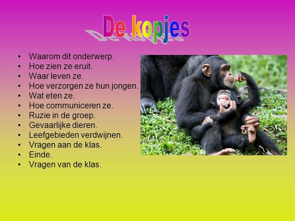 Waar leven chimpansees Wat zijn de gevaarlijke dieren Hoeveel jongen krijgen de vrouwtjes meestal Wat eten ze