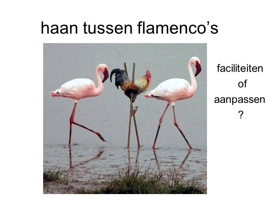 haan tussen flamenco's faciliteiten of aanpassen ?