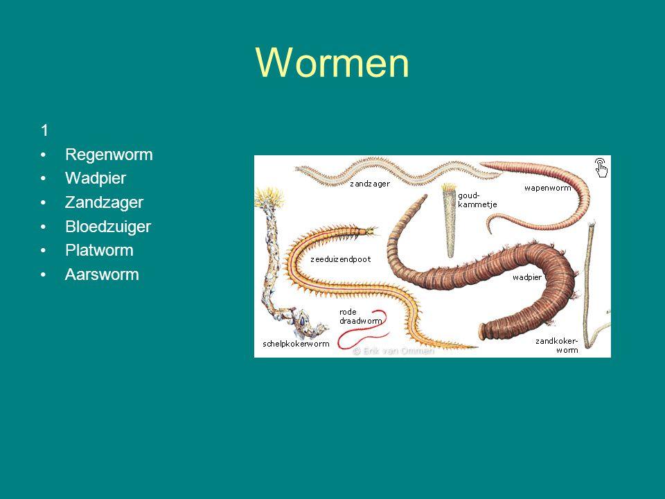 Wormen 1 Regenworm Wadpier Zandzager Bloedzuiger Platworm Aarsworm