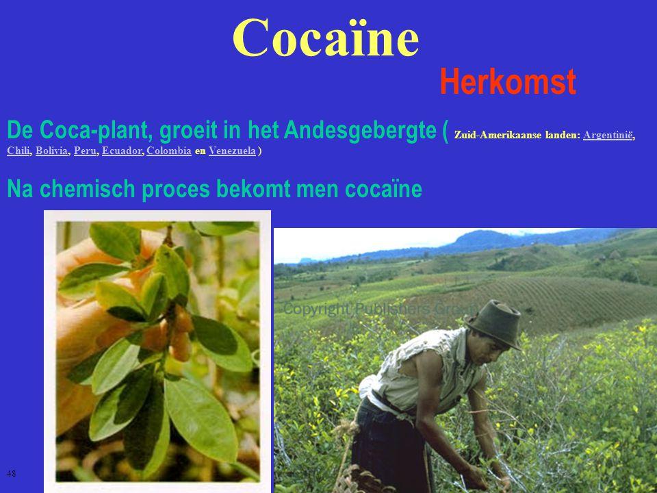 Cocaïne Herkomst De Coca-plant, groeit in het Andesgebergte ( Zuid-Amerikaanse landen: Argentinië, Chili, Bolivia, Peru, Ecuador, Colombia en Venezuela )Argentinië ChiliBoliviaPeruEcuadorColombiaVenezuela Na chemisch proces bekomt men cocaïne 48