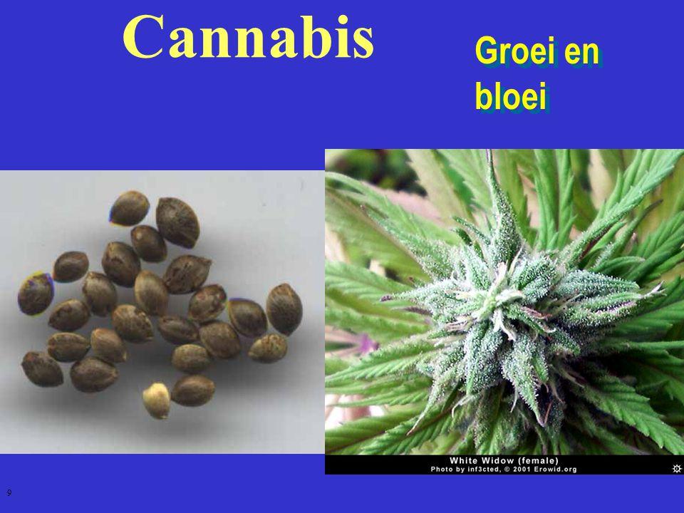 GHB 70 - Medisch: GammaHydroxyButyraat - Milieu: Vloeibare XTC - Date Rape Drug - Euforisch gevoel, zoals dronkenschap - Bij te grote dosis: diepe slaap, soms coma - Kan dodelijk zijn in combinatie met andere drugs of alcohol