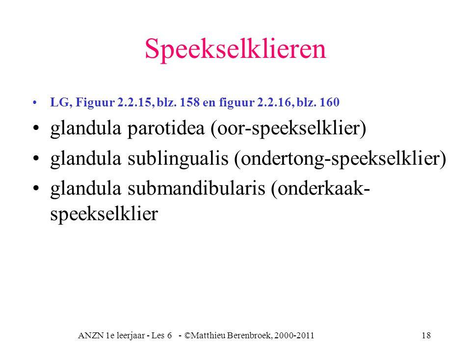 ANZN 1e leerjaar - Les 6 - ©Matthieu Berenbroek, 2000-201118 Speekselklieren LG, Figuur 2.2.15, blz. 158 en figuur 2.2.16, blz. 160 glandula parotidea