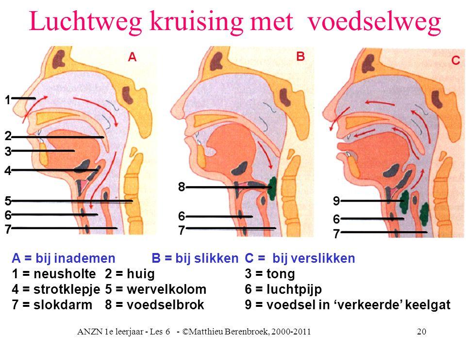 ANZN 1e leerjaar - Les 6 - ©Matthieu Berenbroek, 2000-201120 Luchtweg kruising met voedselweg A = bij inademenB = bij slikkenC = bij verslikken 1 = ne
