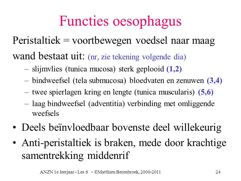 ANZN 1e leerjaar - Les 6 - ©Matthieu Berenbroek, 2000-201124 Functies oesophagus Peristaltiek = voortbewegen voedsel naar maag wand bestaat uit: (nr,