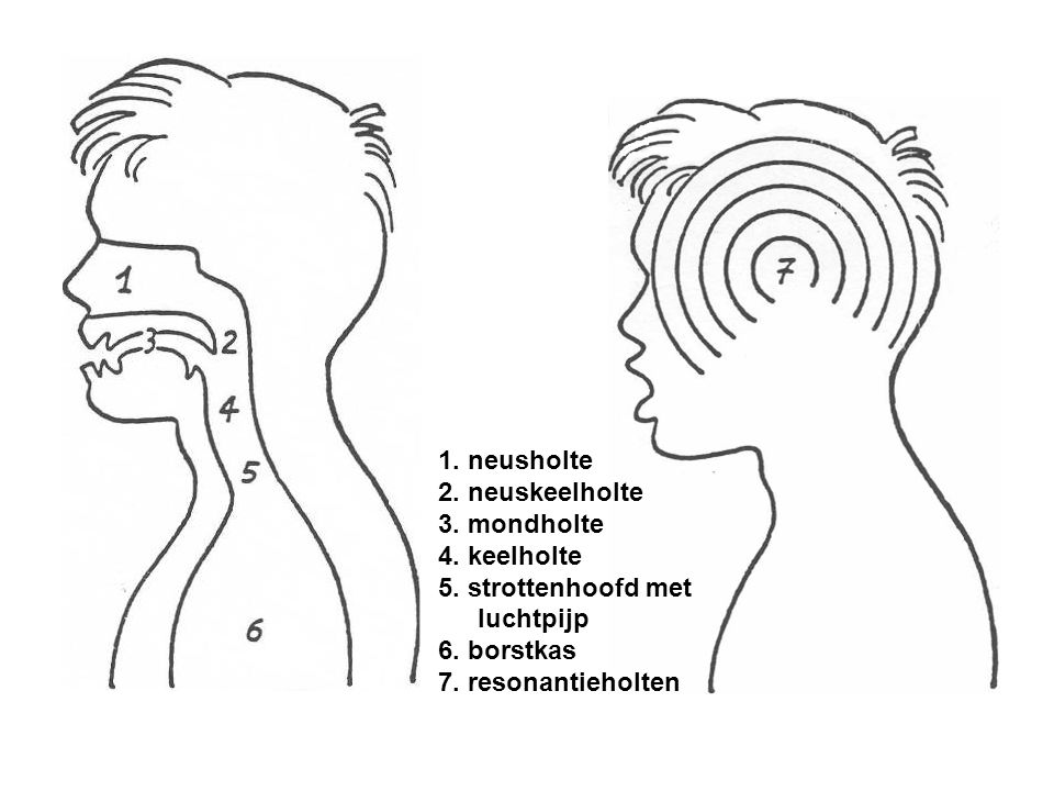 1. neusholte 2. neuskeelholte 3. mondholte 4. keelholte 5. strottenhoofd met luchtpijp 6. borstkas 7. resonantieholten