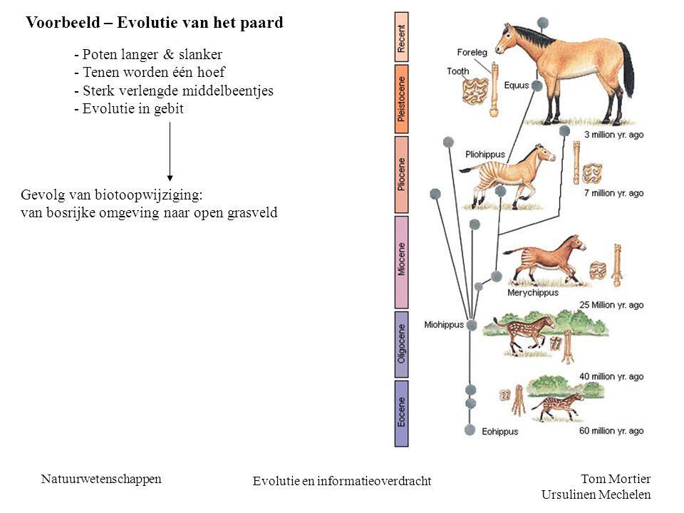 Tom Mortier Ursulinen Mechelen Natuurwetenschappen Evolutie en informatieoverdracht Voorbeeld – Evolutie van het paard - Poten langer & slanker - Tene