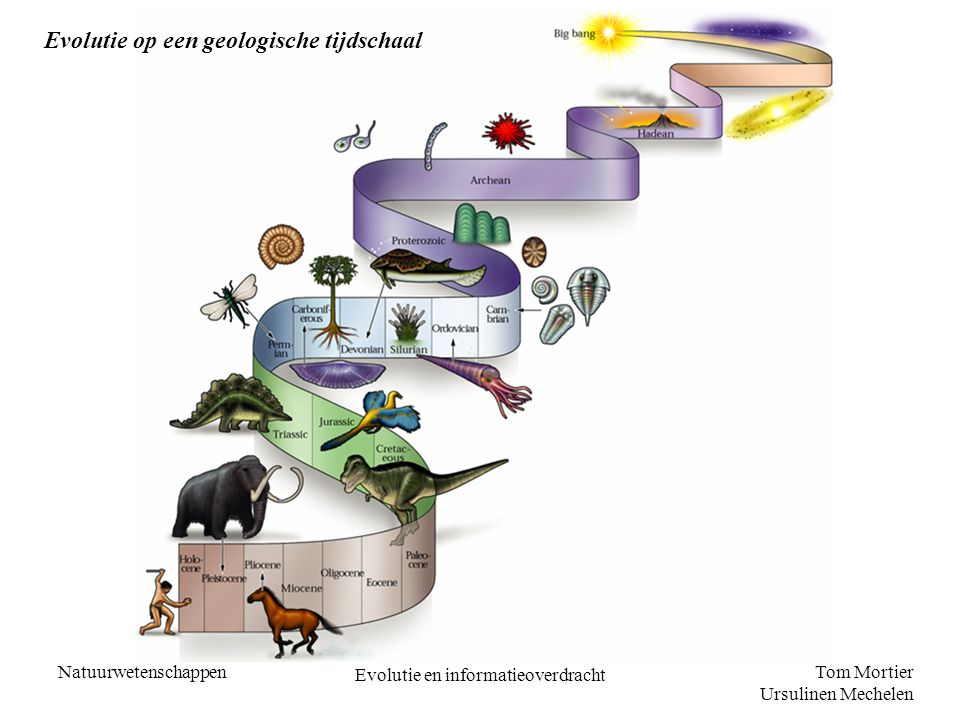 Tom Mortier Ursulinen Mechelen Natuurwetenschappen Evolutie en informatieoverdracht Evolutie op een geologische tijdschaal