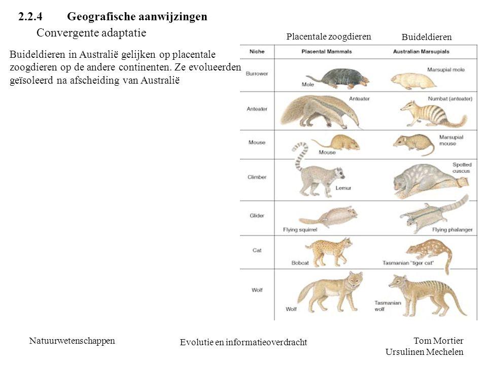Tom Mortier Ursulinen Mechelen Natuurwetenschappen Evolutie en informatieoverdracht 2.2.4Geografische aanwijzingen Convergente adaptatie Placentale zo