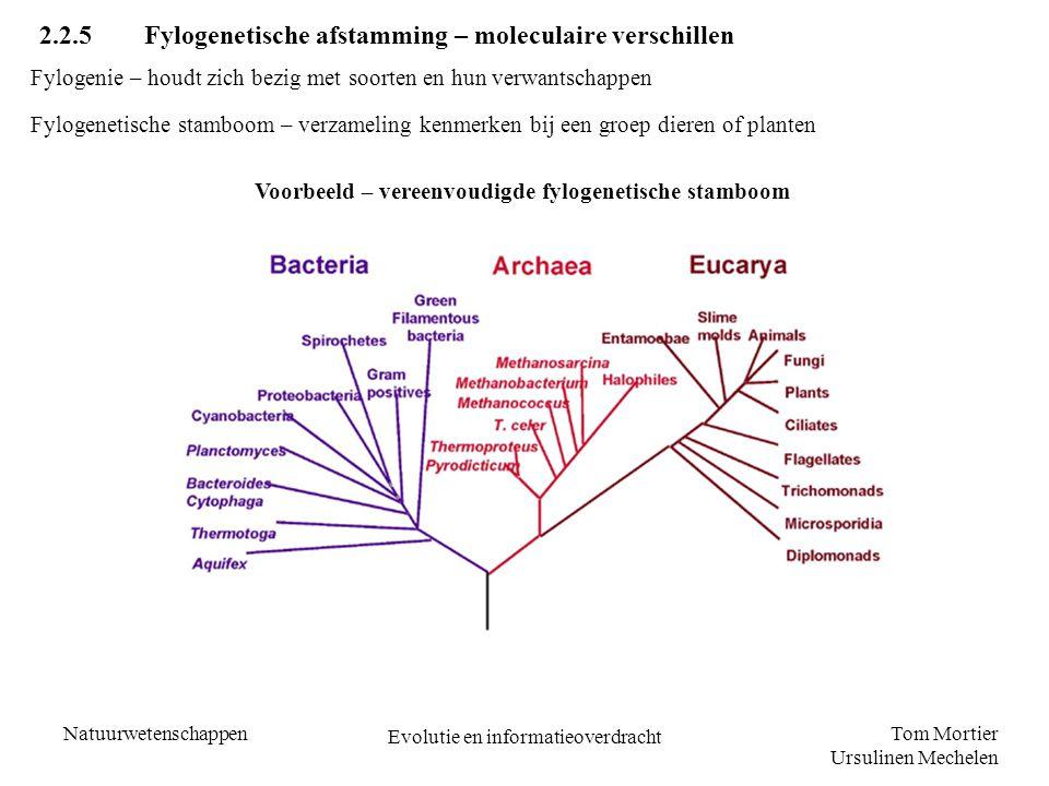 Tom Mortier Ursulinen Mechelen Natuurwetenschappen Evolutie en informatieoverdracht 2.2.5 Fylogenetische afstamming – moleculaire verschillen Fylogeni