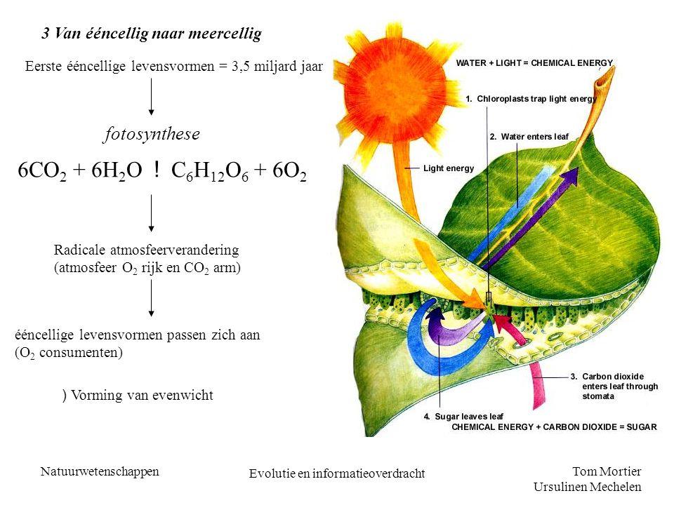 Tom Mortier Ursulinen Mechelen Natuurwetenschappen Evolutie en informatieoverdracht 3 Van ééncellig naar meercellig Eerste ééncellige levensvormen = 3