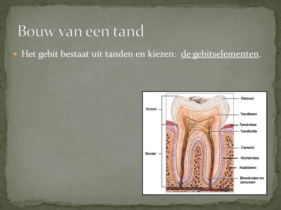 Het gebit bestaat uit tanden en kiezen: de gebitselementen.