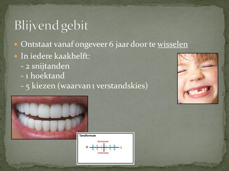 Door te poetsen verwijder je tandplak - Tandplak bestaat uit bacteriën, etensresten en speeksel Poets minimaal één keer per dag grondig.