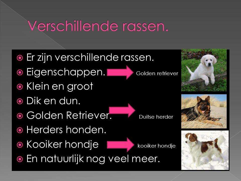  Er zijn verschillende rassen.  Eigenschappen. Golden retriever  Klein en groot  Dik en dun.  Golden Retriever. Duitse herder  Herders honden. 