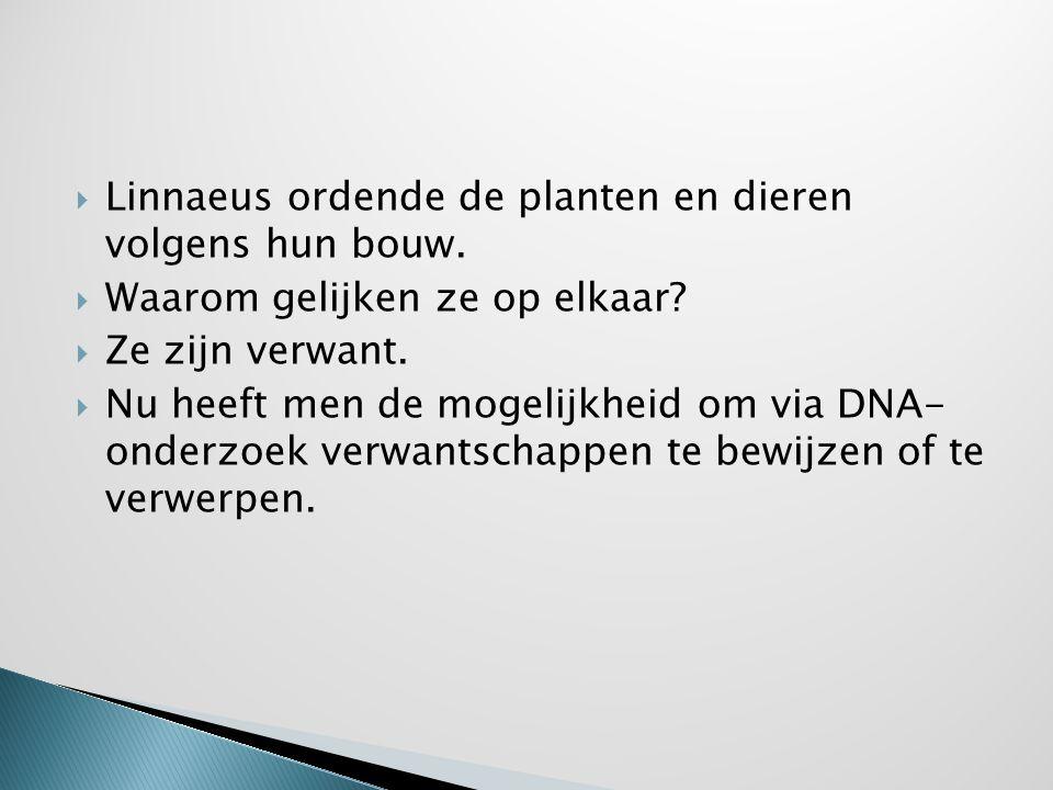  Linnaeus ordende de planten en dieren volgens hun bouw.  Waarom gelijken ze op elkaar?  Ze zijn verwant.  Nu heeft men de mogelijkheid om via DNA