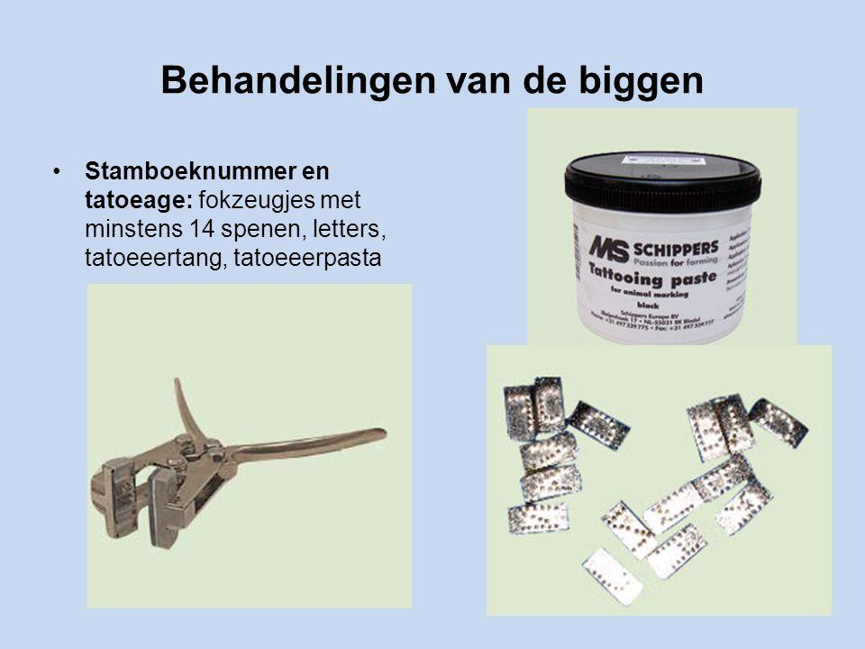 Behandelingen van de biggen Stamboeknummer en tatoeage: fokzeugjes met minstens 14 spenen, letters, tatoeeertang, tatoeeerpasta