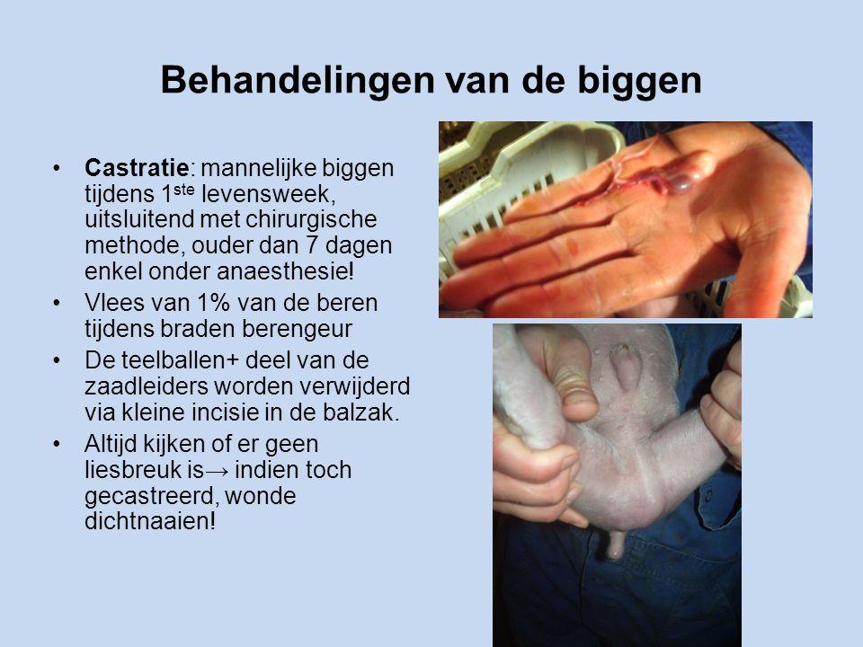 Behandelingen van de biggen Castratie: mannelijke biggen tijdens 1 ste levensweek, uitsluitend met chirurgische methode, ouder dan 7 dagen enkel onder anaesthesie.