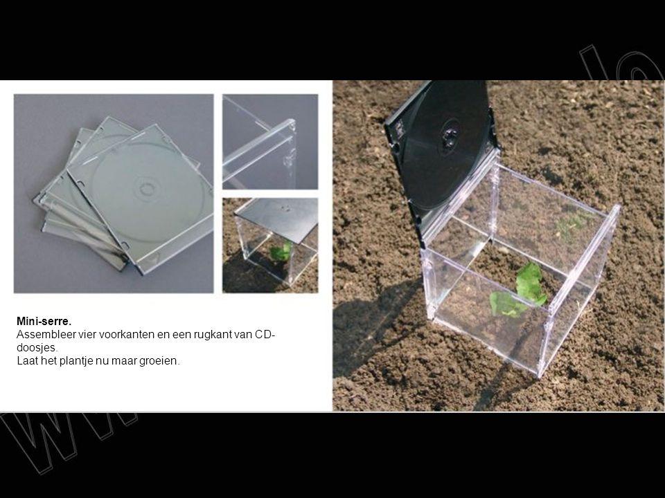 Mini-serre. Assembleer vier voorkanten en een rugkant van CD- doosjes. Laat het plantje nu maar groeien.