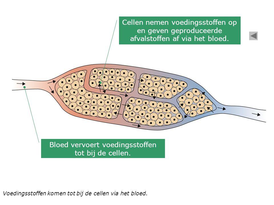 Voedingsstoffen komen tot bij de cellen via het bloed. Bloed vervoert voedingsstoffen tot bij de cellen. Cellen nemen voedingsstoffen op en geven gepr