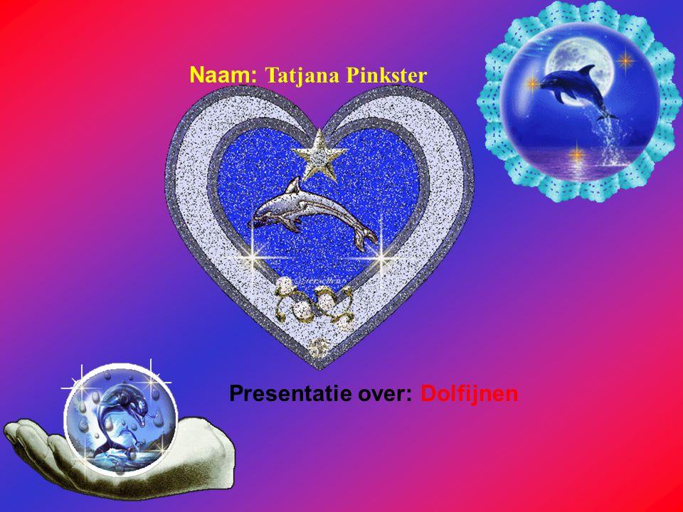 Naam: Tatjana Pinkster Presentatie over: Dolfijnen Klik op Naam .