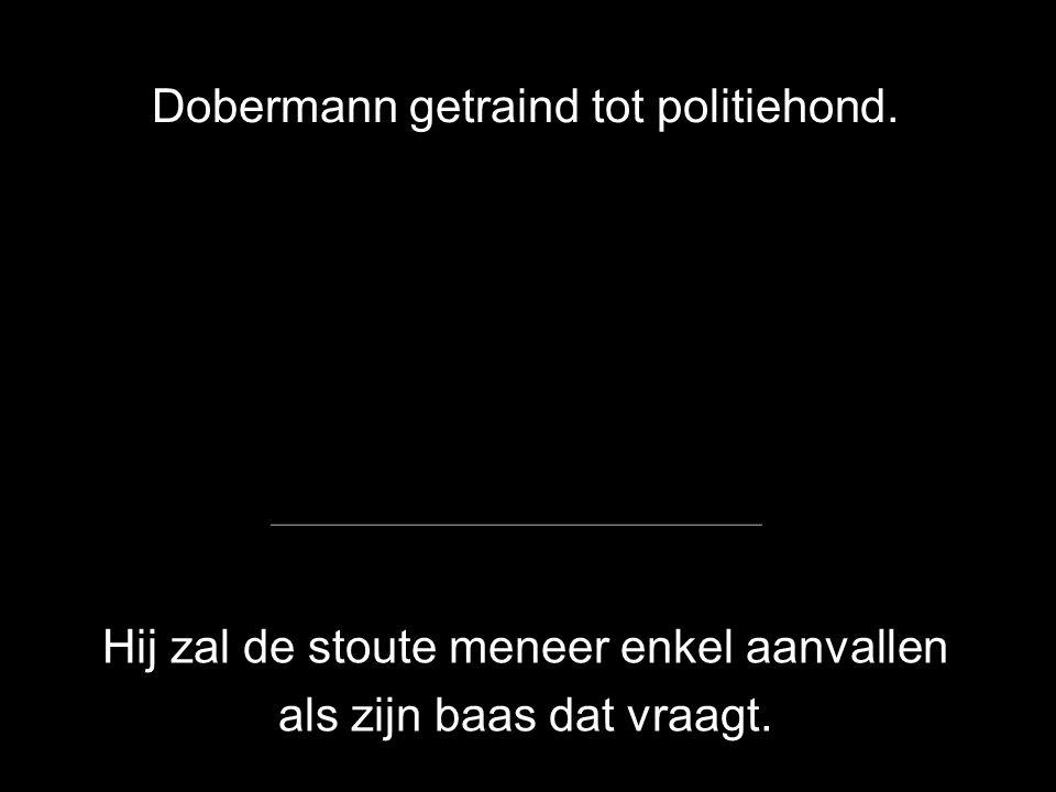 Dobermann volgt de voet van zijn baas.