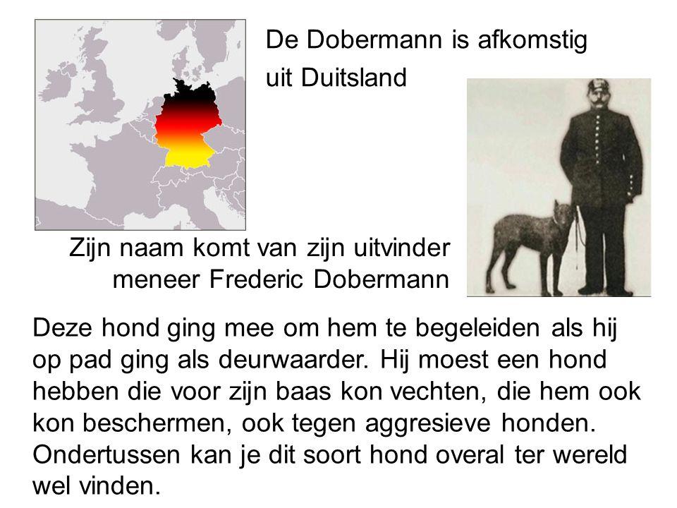 De Dobermann is afkomstig uit Duitsland Zijn naam komt van zijn uitvinder meneer Frederic Dobermann Deze hond ging mee om hem te begeleiden als hij op pad ging als deurwaarder.