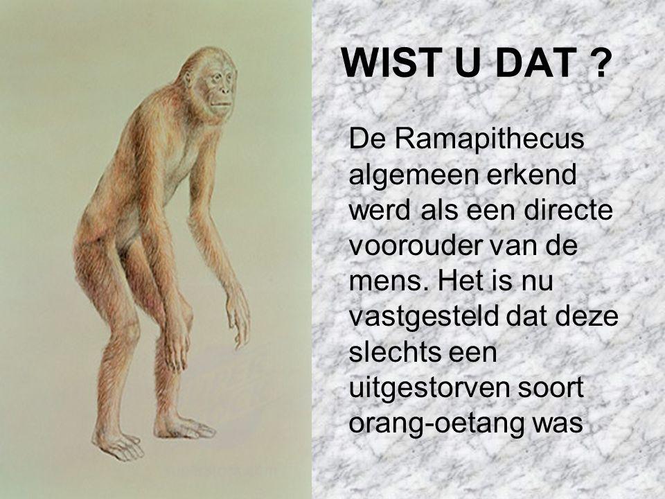 WIST U DAT .De Ramapithecus algemeen erkend werd als een directe voorouder van de mens.