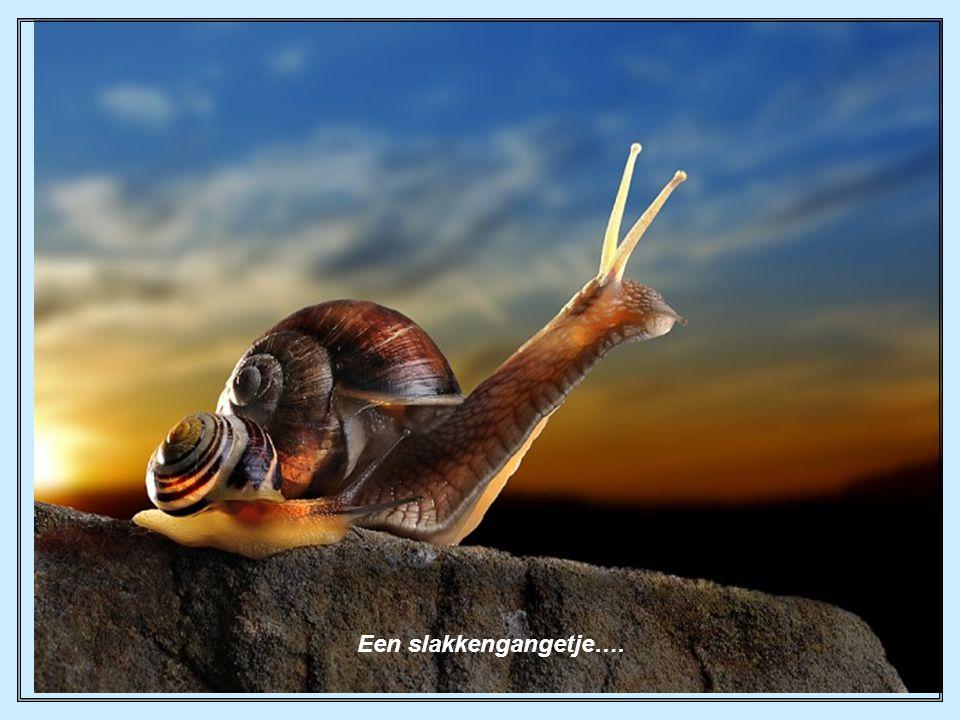 Een slakkengangetje….