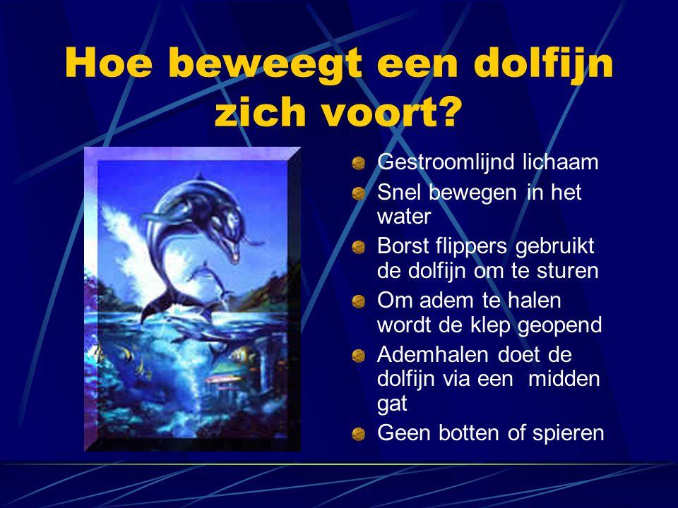 Hoe beweegt een dolfijn zich voort? Gestroomlijnd lichaam Snel bewegen in het water Borst flippers gebruikt de dolfijn om te sturen Om adem te halen w