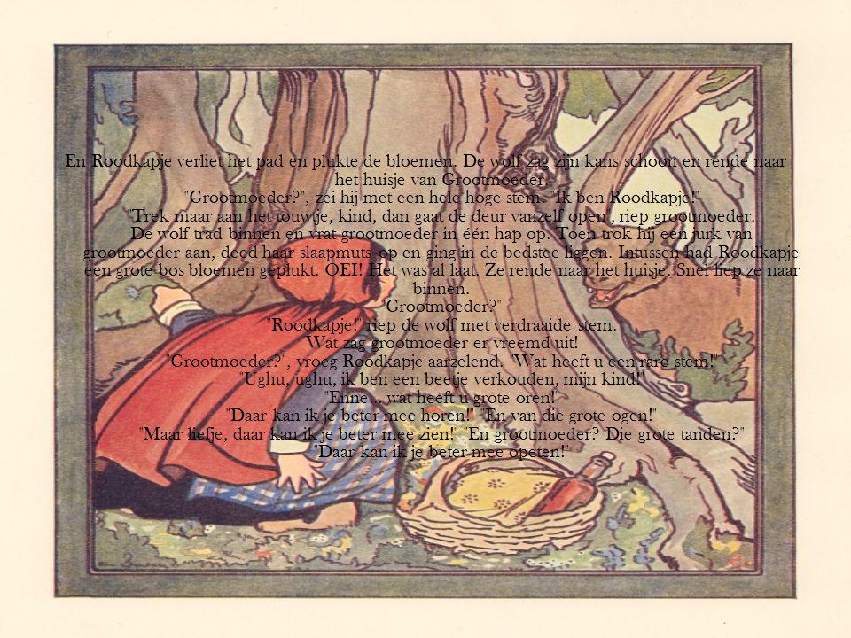 En Roodkapje verliet het pad en plukte de bloemen. De wolf zag zijn kans schoon en rende naar het huisje van Grootmoeder.