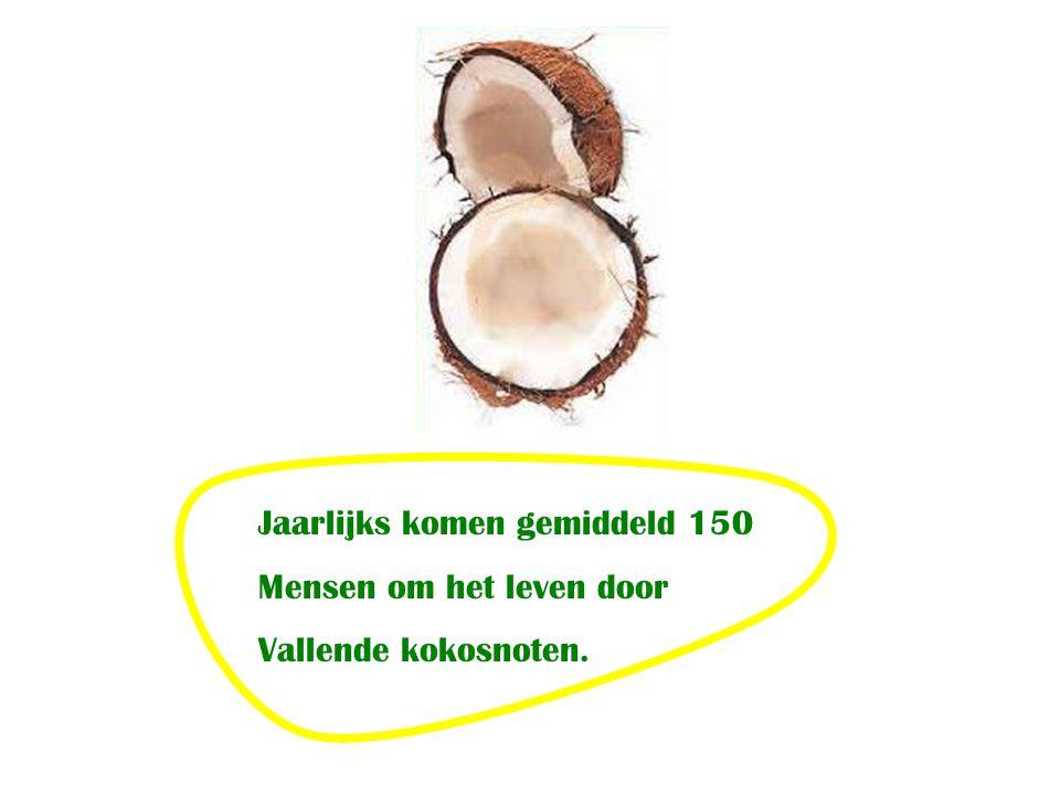 Jaarlijks komen gemiddeld 150 Mensen om het leven door Vallende kokosnoten.