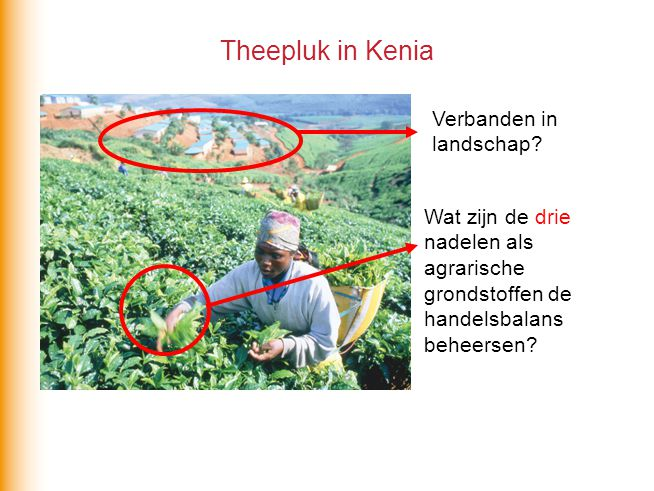 Theepluk in Kenia Verbanden in landschap.